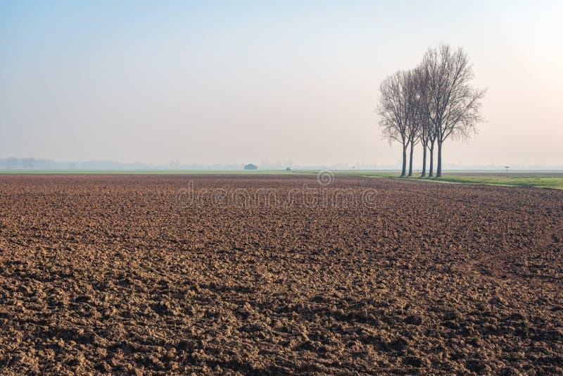 在领域的边缘的高光秃的树 免版税图库摄影