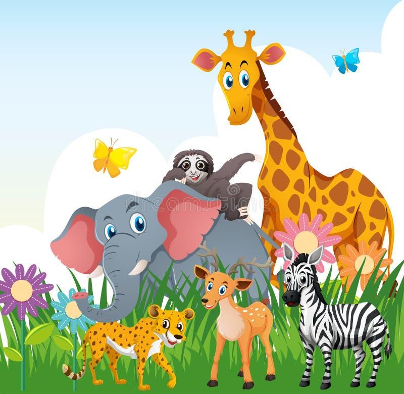 在领域的野生动物 向量例证