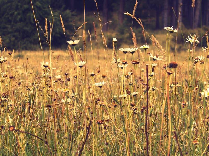 在领域的野花 免版税图库摄影