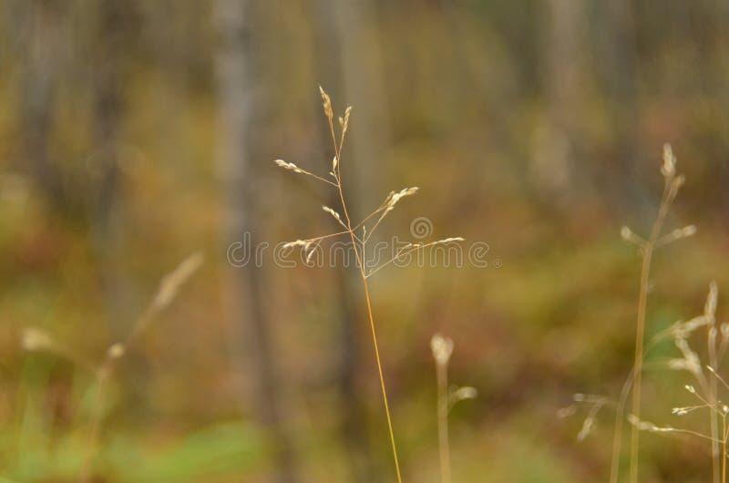 在领域的野草 美好的秋天自然 宏观图象,选择聚焦 免版税图库摄影