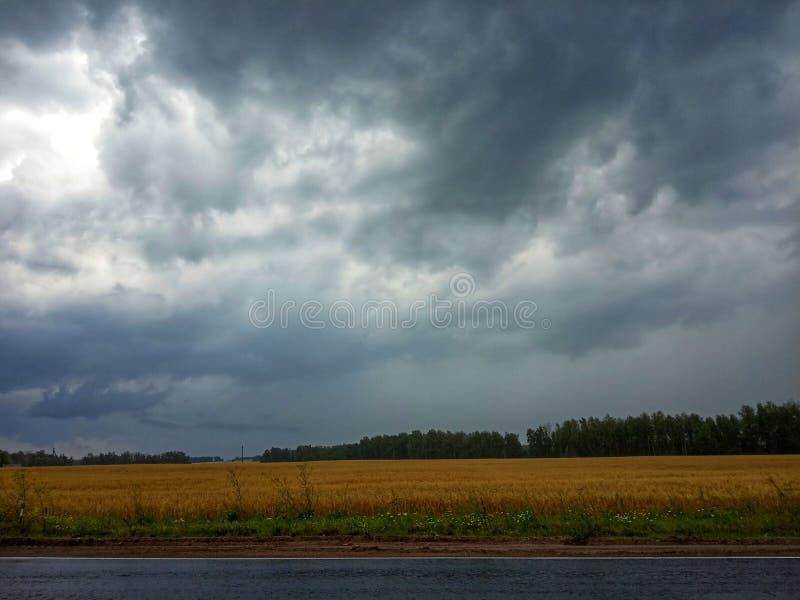 在领域的雨 免版税库存图片