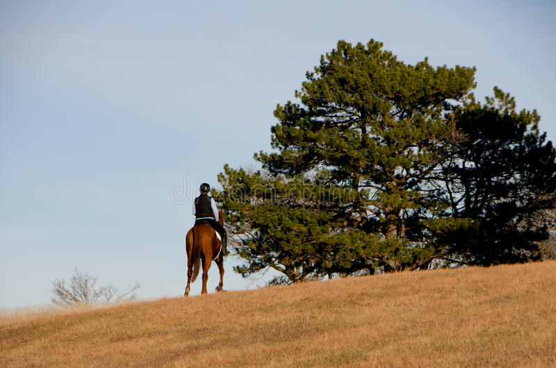 在领域的马骑术 免版税库存图片