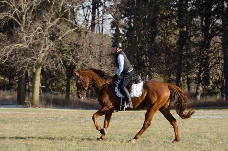 在领域的马骑术 免版税库存照片