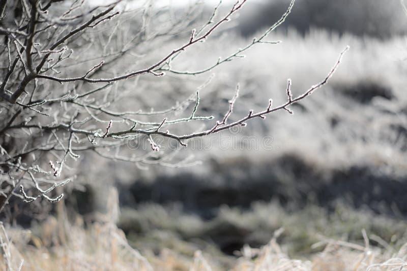 在领域的冻结的分支 免版税库存照片