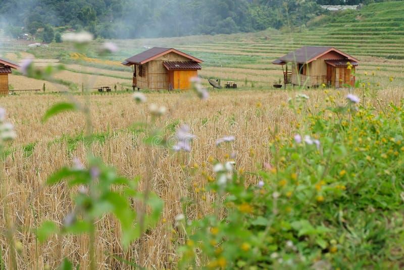 在领域米大阳台的村庄在Mae巴生Luang村庄,土井因达农,Chiangmai 图库摄影