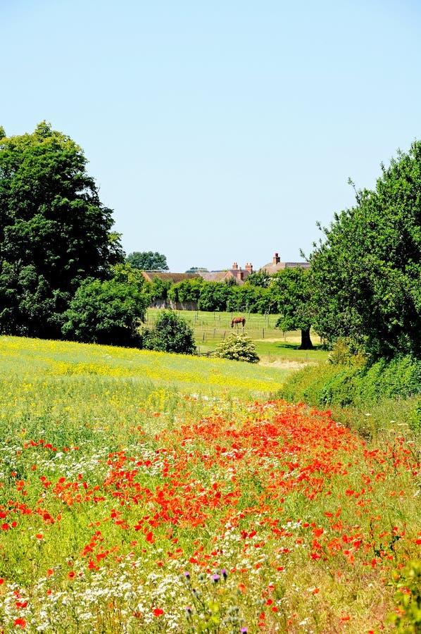 在领域, Lichfield,英国的野花。 免版税库存图片