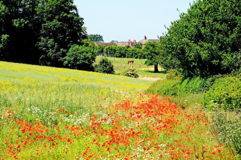 在领域, Lichfield,英国的Wildlowers。 免版税库存照片