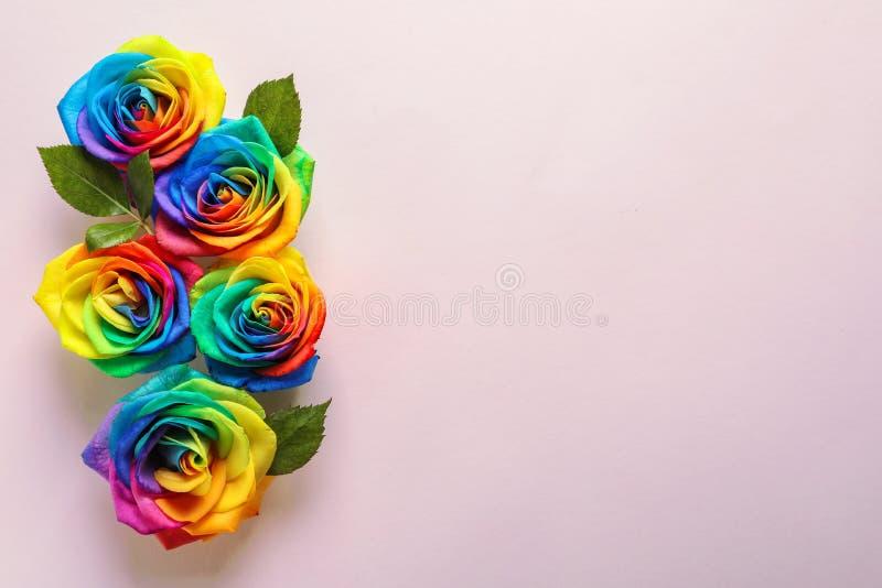 在颜色背景的彩虹玫瑰色花 库存图片