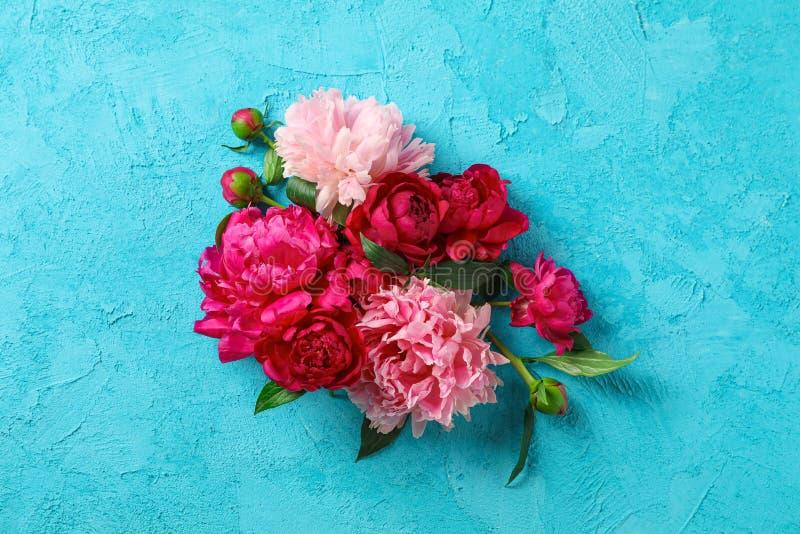在颜色背景的美丽的牡丹花 免版税图库摄影