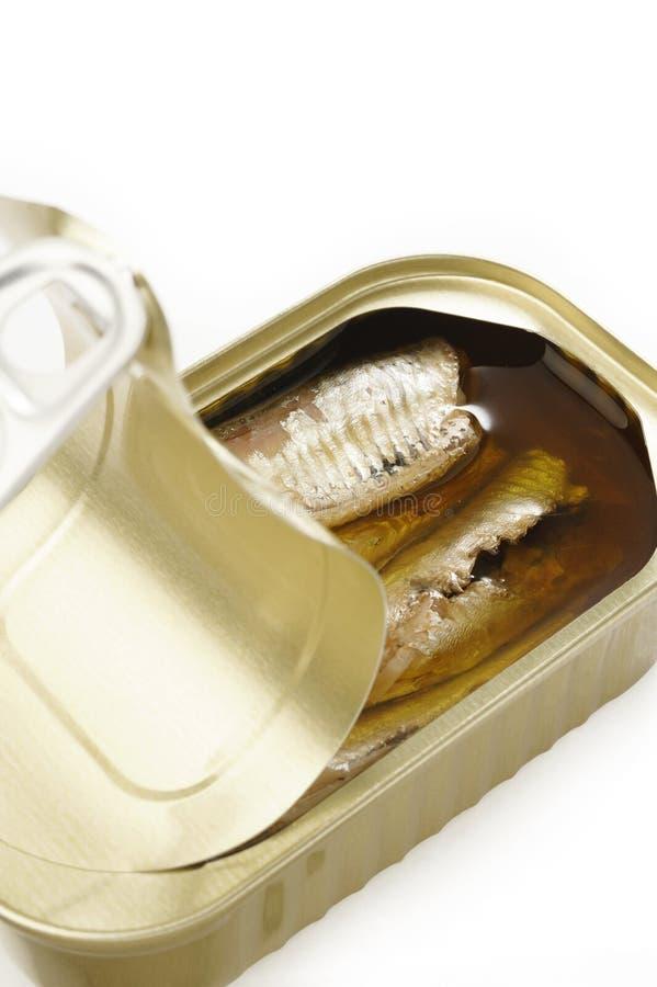 在额外处女橄榄油的沙丁鱼在白色背景 库存照片