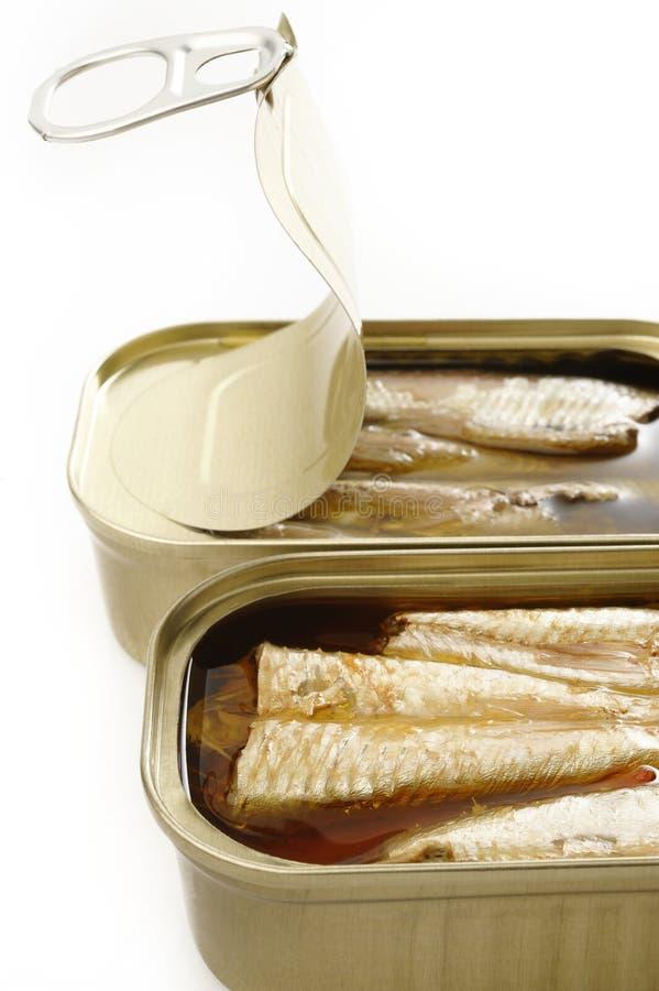 在额外处女橄榄油的沙丁鱼 库存图片