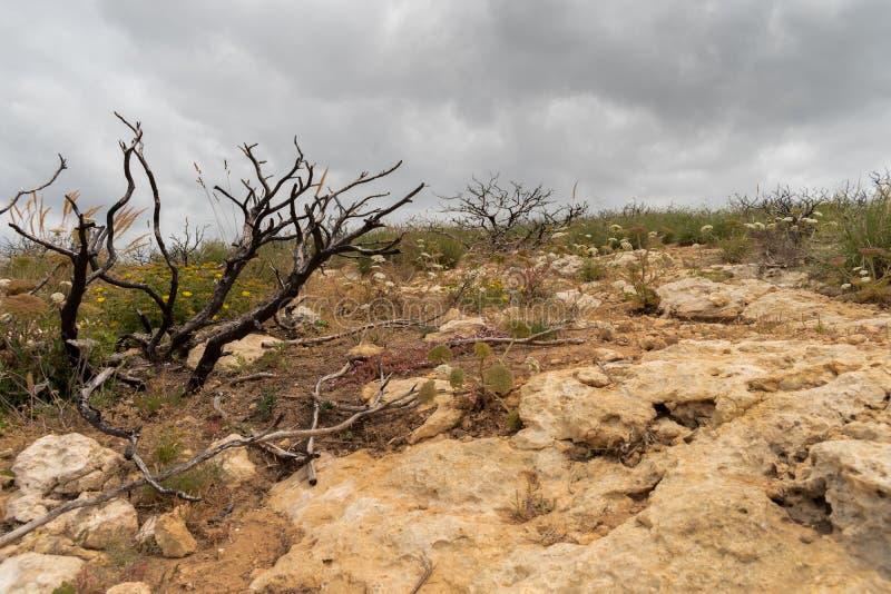 在风景的被烧的树在阿尔加威顶部,葡萄牙的峭壁 库存图片
