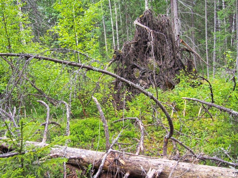 在风暴以后的森林封锁 库存图片