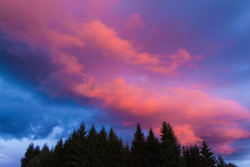 在风暴前的红色云彩在森林 图库摄影