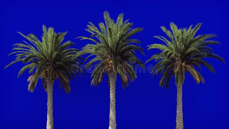 在风的棕榈树在蓝色屏幕上 背景美好的例证夏天向量 3d翻译 库存照片
