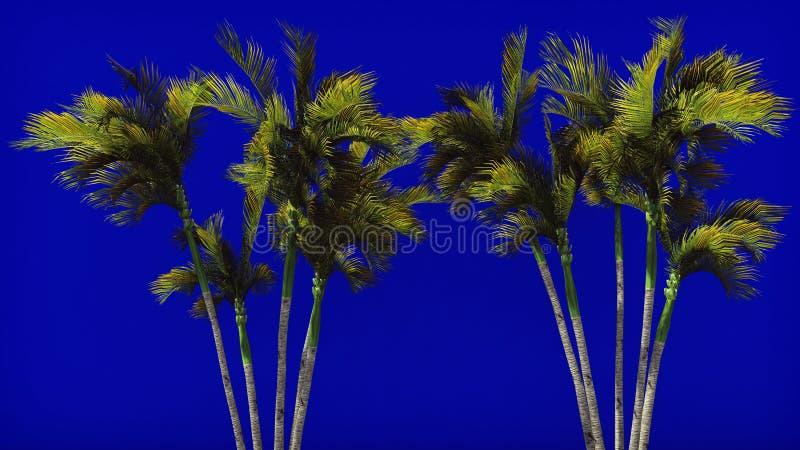 在风的棕榈树在蓝色屏幕上 背景美好的例证夏天向量 3d翻译 库存图片