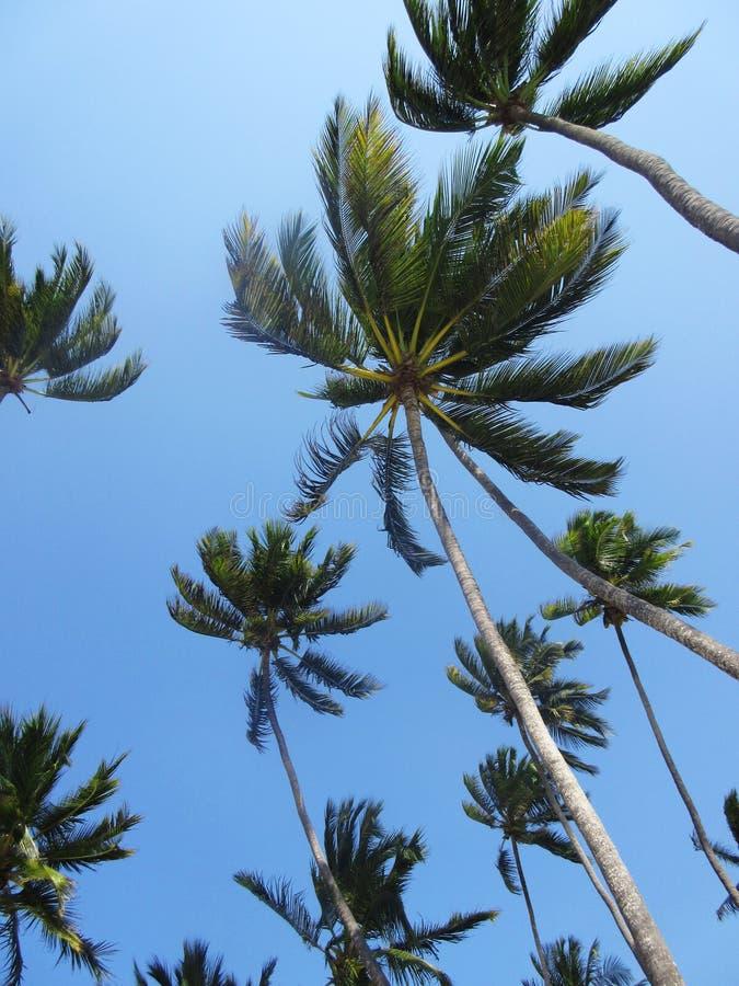 在风的棕榈树 免版税图库摄影