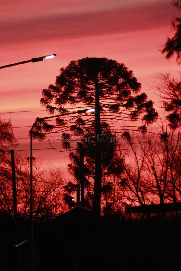 在风雨如磐的天空的树 免版税库存照片