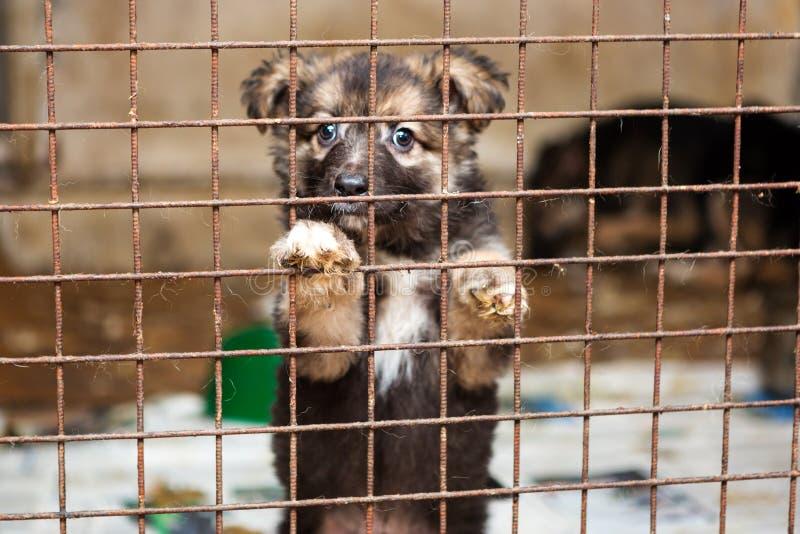 在风雨棚的笼子的小的小狗 免版税库存图片