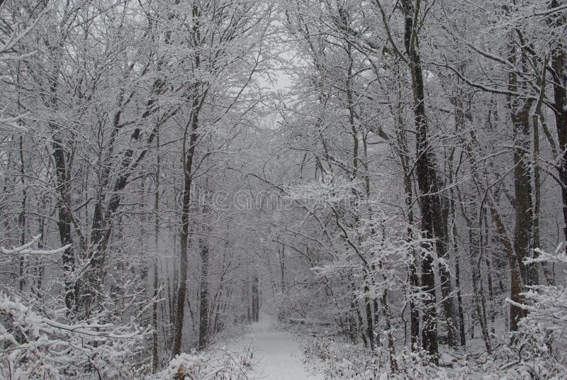 在风暴以后的森林 免版税库存图片