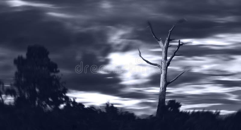 在风暴的死的树 免版税库存图片