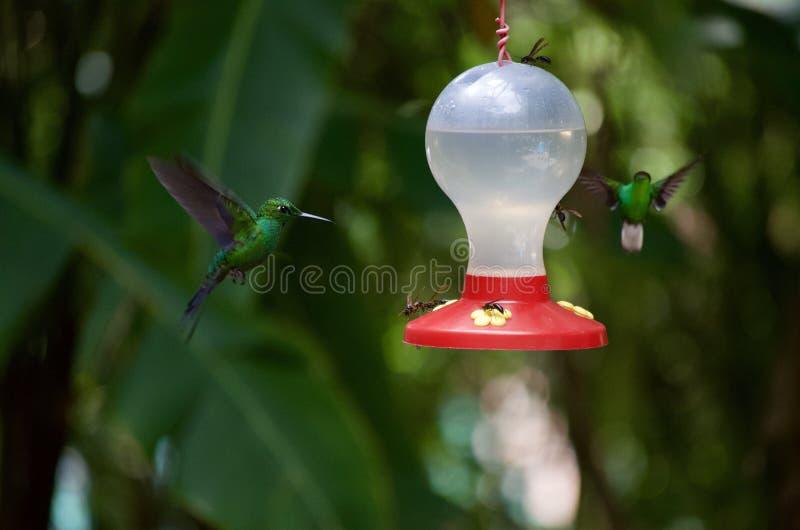 在飞行中哼唱着鸟 免版税图库摄影