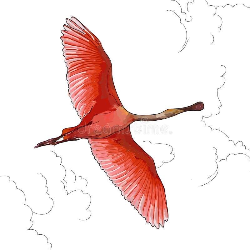 在飞行中桃红色火鸟的例证 免版税图库摄影