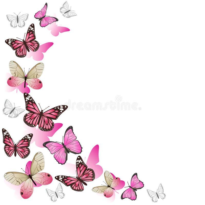 在飞行中桃红色蝴蝶框架  r o 库存例证