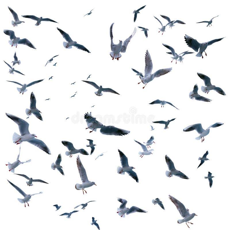 在飞行中海鸥的汇集 海鸟 图库摄影