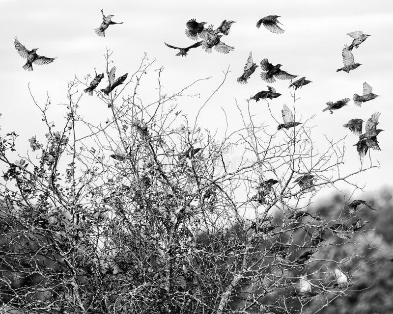 在飞行中鸟群 免版税库存图片