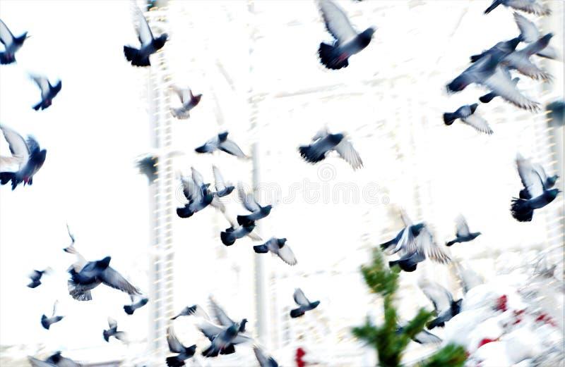 在飞行中鸽子群,在正方形,软的选择聚焦 免版税库存图片