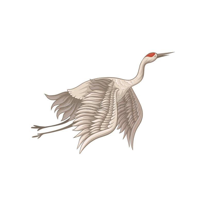 在飞行行动的美丽的红被加冠的起重机 与米黄羽毛、长的稀薄的额嘴、腿和脖子的鸟 平的传染媒介 皇族释放例证
