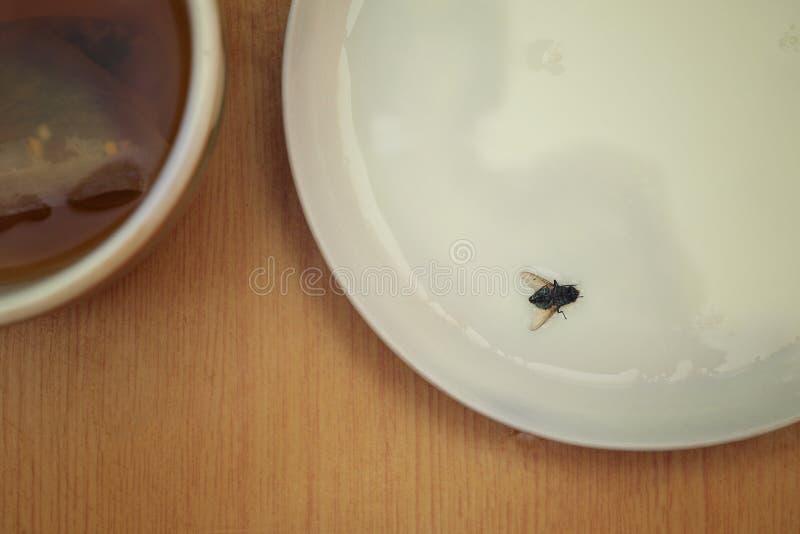 在食物登陆的飞行 库存图片