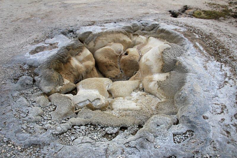 在饼干喷泉水池的壳春天在黄石国家公园,美国 免版税图库摄影