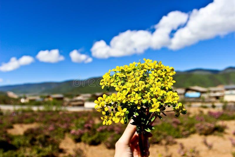 在香格里拉的野花 库存照片