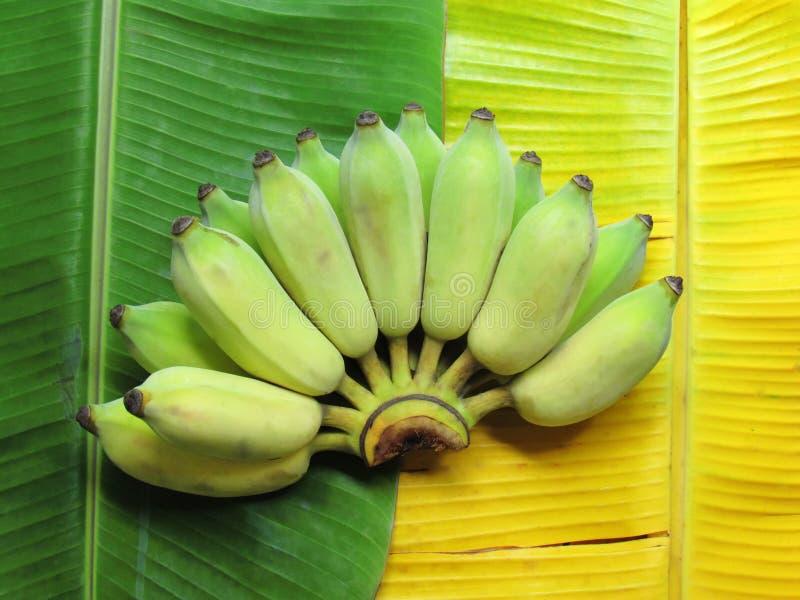 在香蕉绿色叶子和香蕉黄色叶子安置的香蕉 库存照片