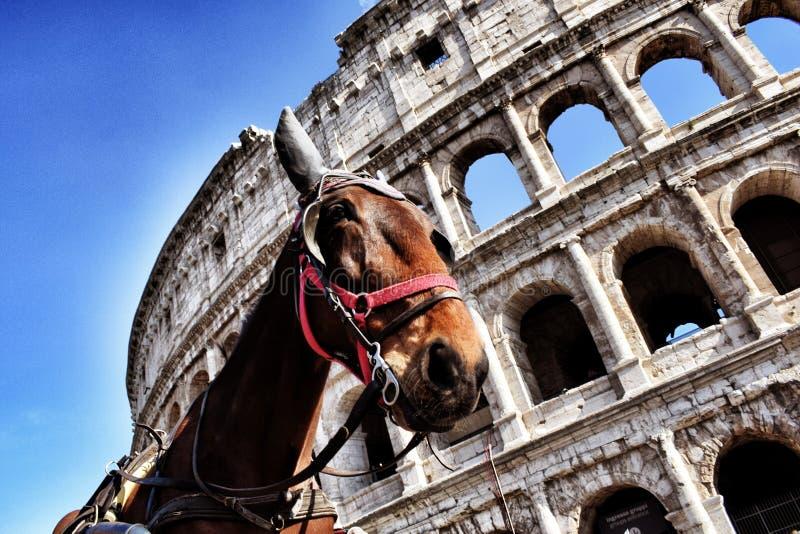 在马儿童车的参观罗马 库存照片