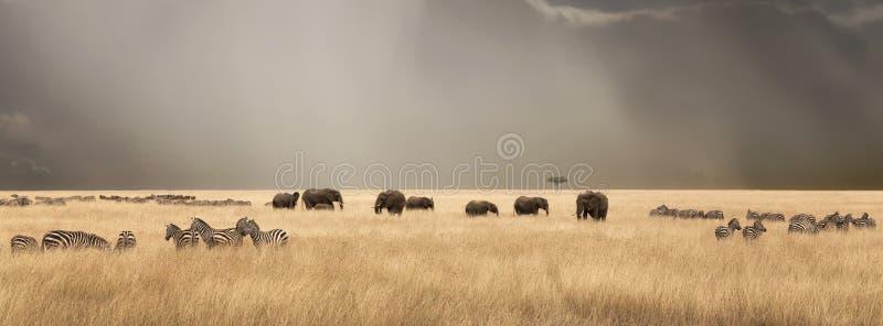 在马塞人玛拉的风雨如磐的天空与大象和斑马 库存照片