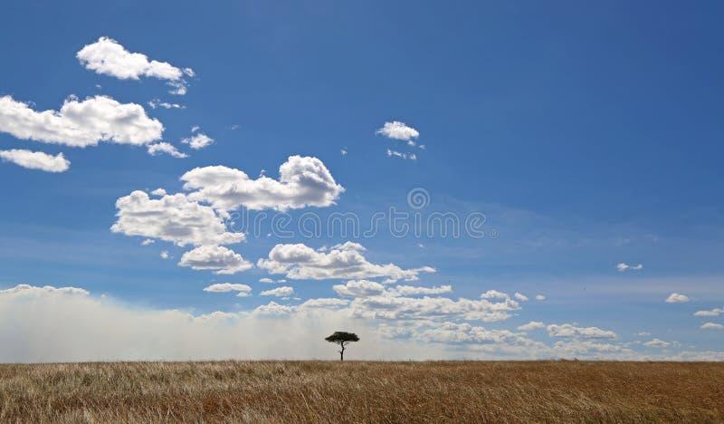 在马塞语玛拉的金合欢树 免版税库存照片