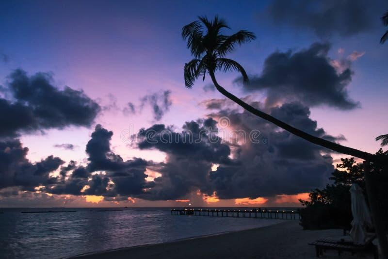 在马尔代夫海岛海滩棕榈树和太平洋的热带日落 库存图片