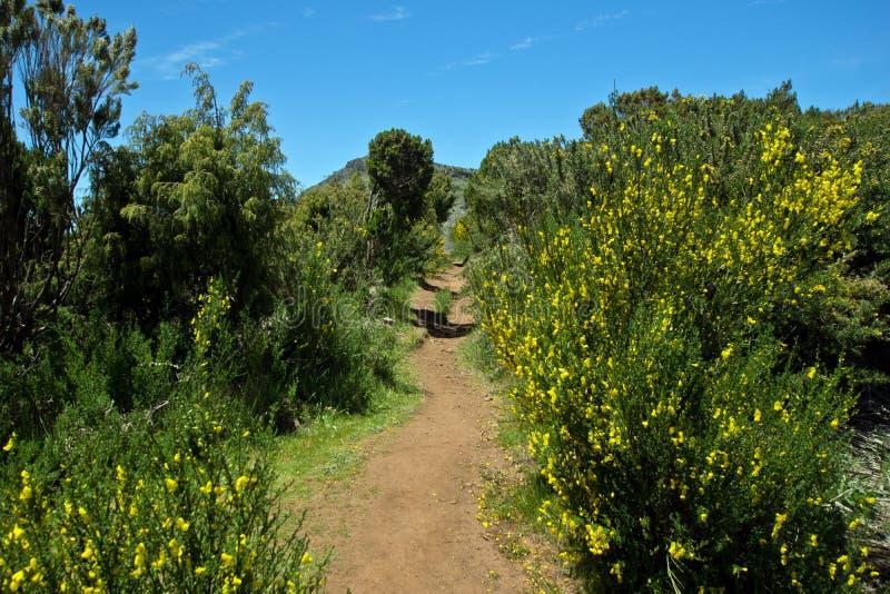 在马德拉岛的山的桑迪供徒步旅行的小道 免版税库存照片