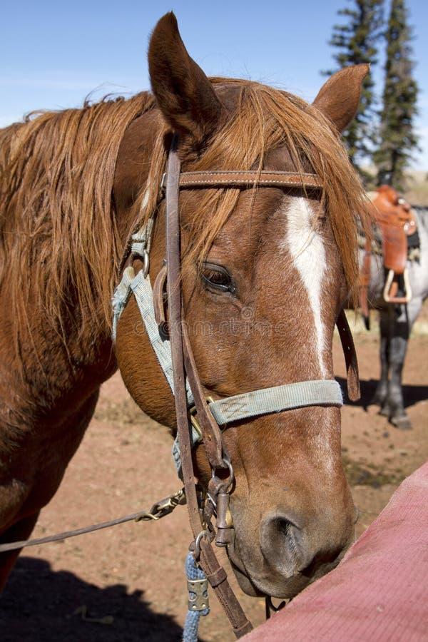 在马棚的西部拖骑马 库存照片