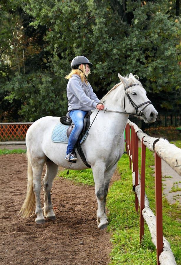 在马的女孩车手 免版税图库摄影
