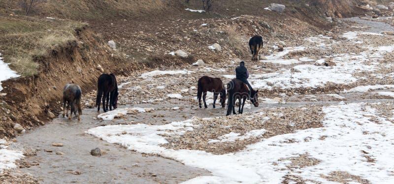 在马的车手在河在冬天 库存照片