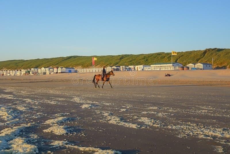 在马背上亚马逊在日落期间的海滩 免版税库存图片