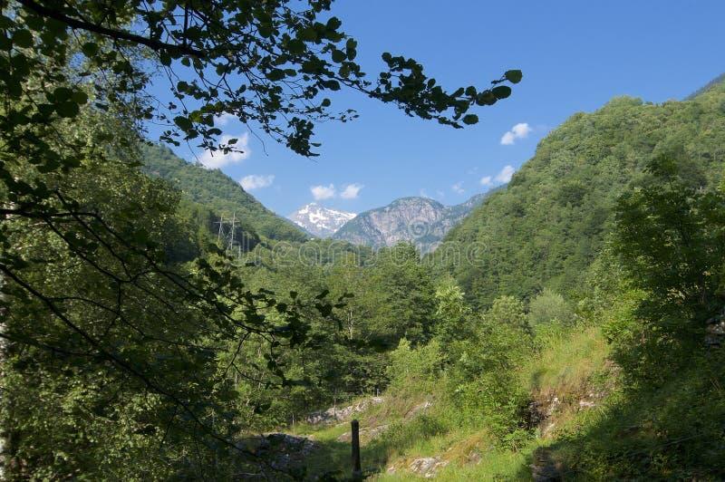 在马贾河谷的美好的山景在小行政区提契诺州,瑞士 免版税库存图片