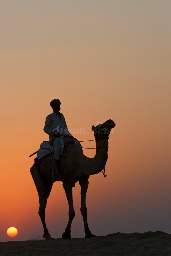 在骆驼后的太阳 免版税库存图片