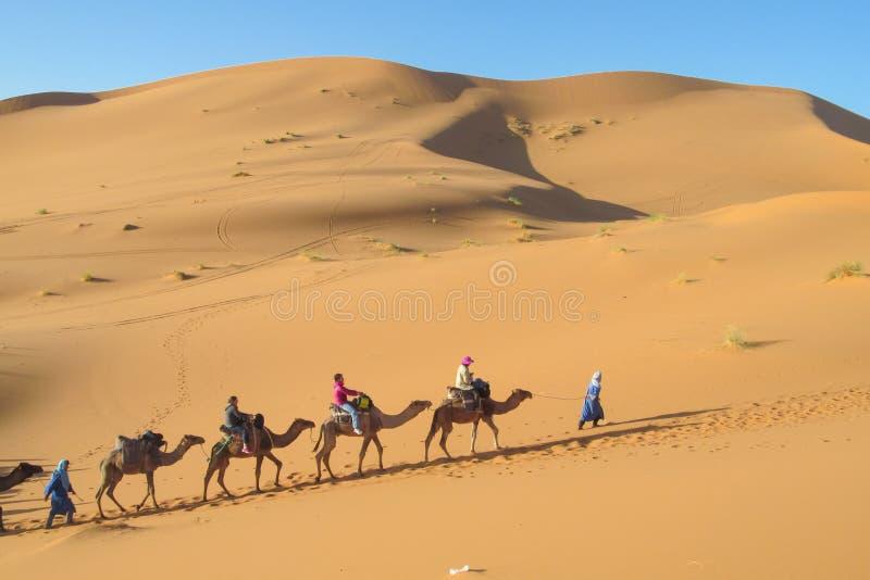 在骆驼的徒步旅行队在撒哈拉大沙漠支持 库存照片