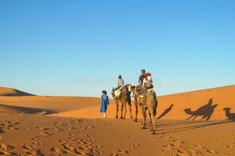 在骆驼的徒步旅行队在撒哈拉大沙漠支持 图库摄影