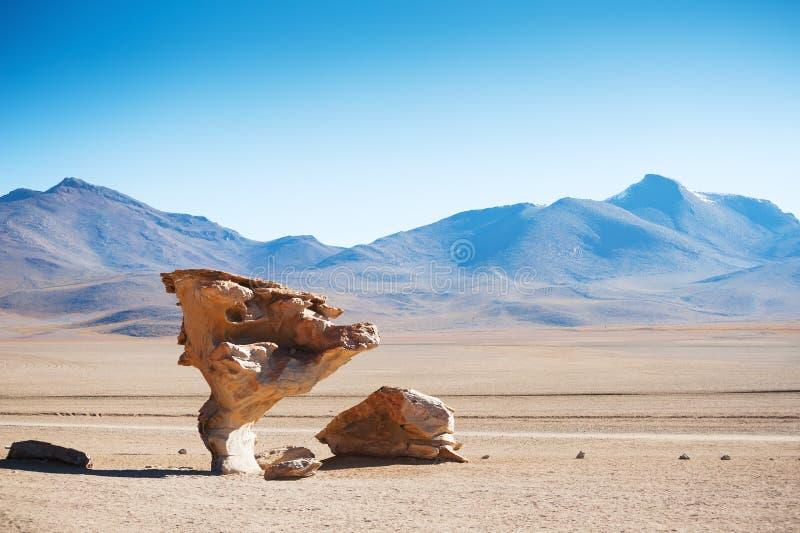 在高原Altiplano,玻利维亚的石树 免版税库存图片